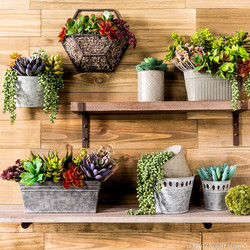 Wall-Mounted Succulents