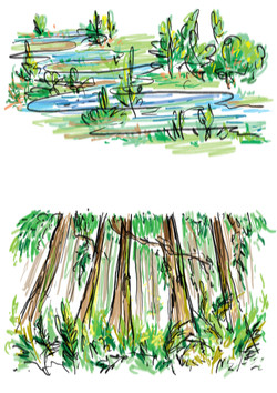 1-water-and-trees