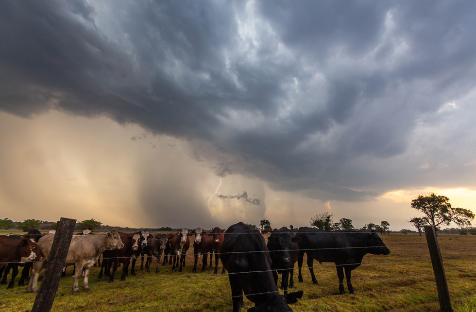 Cows, outflow and CG