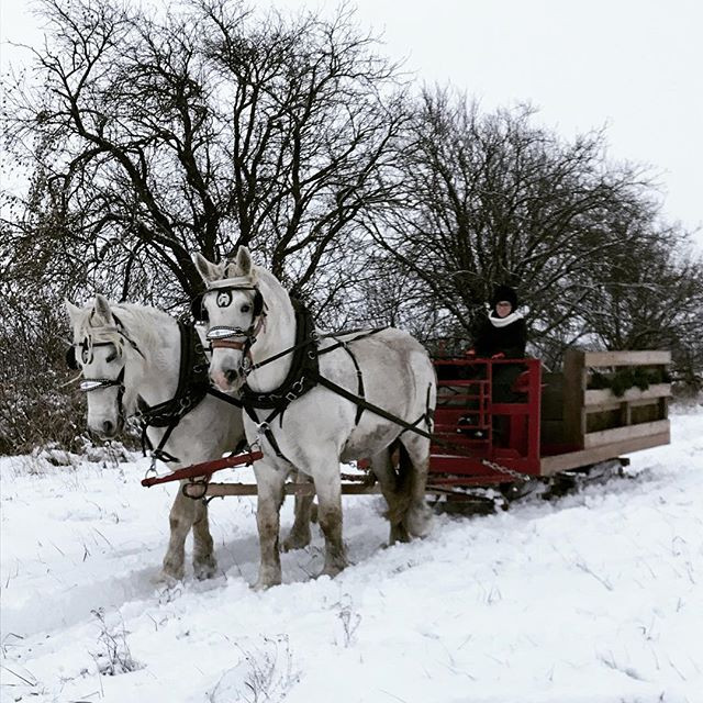 We are now offering sleigh rides! We can