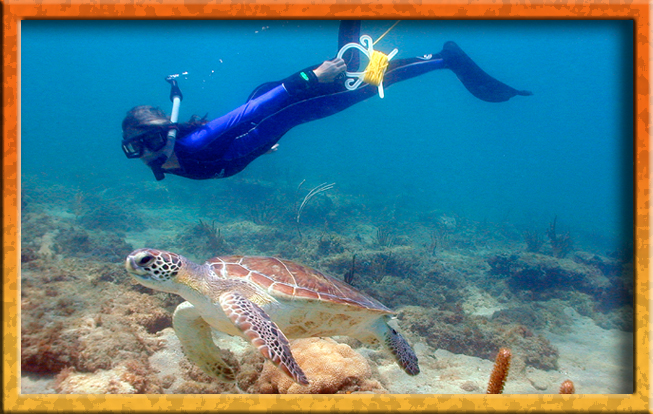 Snorkler & Sea turtle