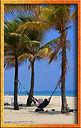 palm tres on beach