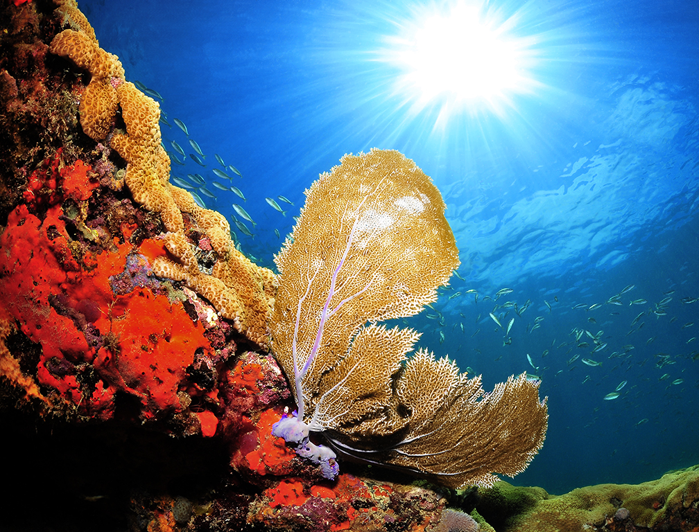 Local reef/sea fan