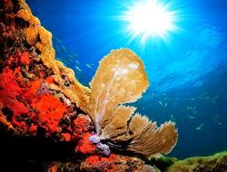 Local reef/sea fan