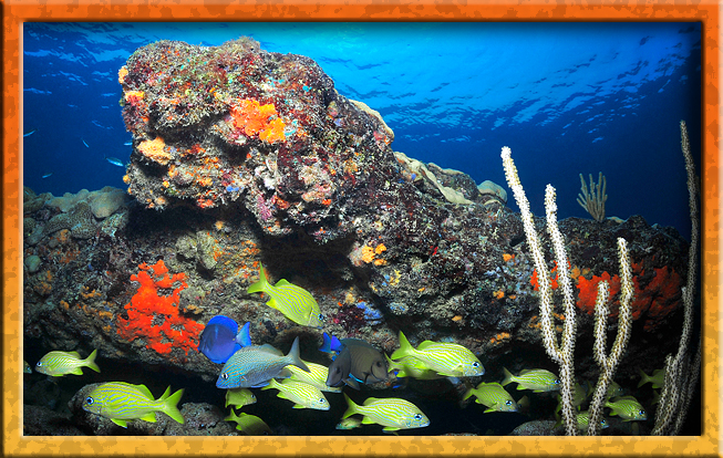 Three coral reefs!