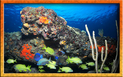 Three coral reefs!