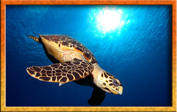 Turtle and Sun