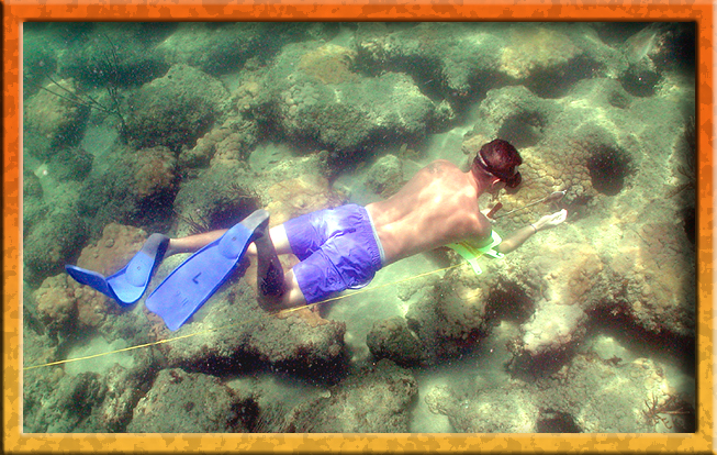 snorkler on first reef