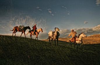 Horses in Pack train, Wyoming
