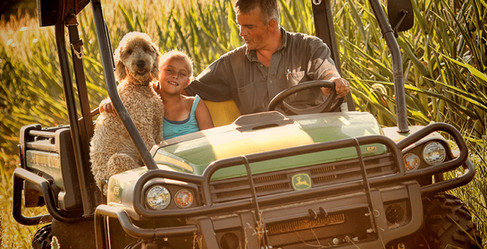 Checking the corn with kid and dog