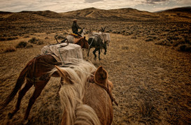 Running horses in Pack train