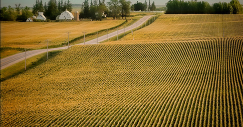 Cornfield road and farm midwest usa
