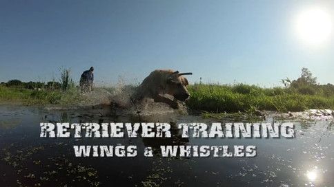 Retriever Training
