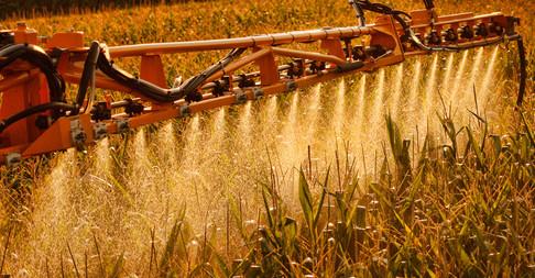 Spraying herbicide on corn field