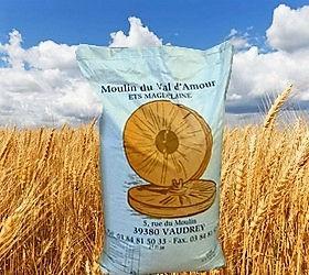 champs blé.jpg