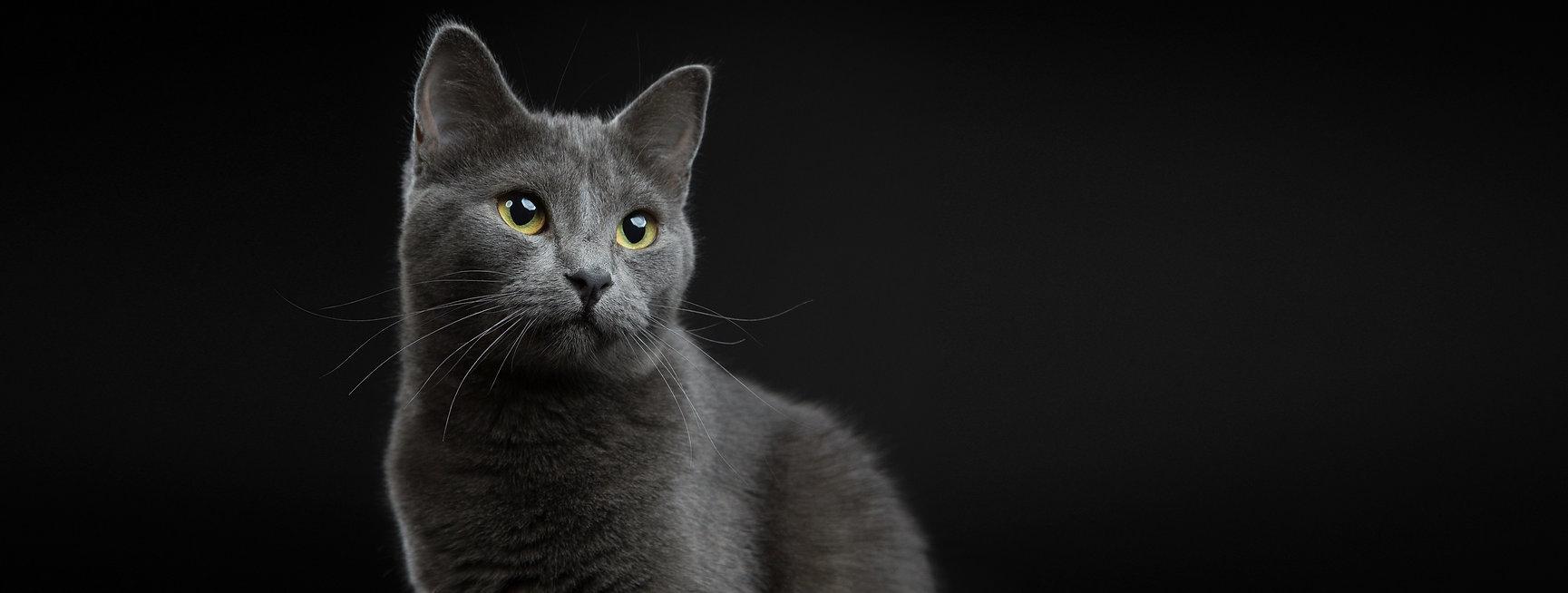 evavandeijk dierenfotografie kattenfotografie