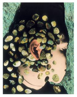 Auricula 10/26/2001