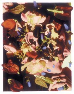 Auricula 4/1/2002