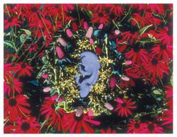 Auricula 7/16/1998