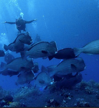 Screen Shot 2018-08-06 at 11.16.03.png