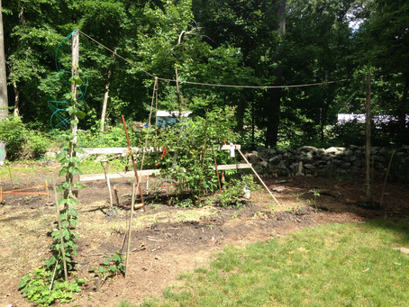 Local Backyard Organic Gardening Movement
