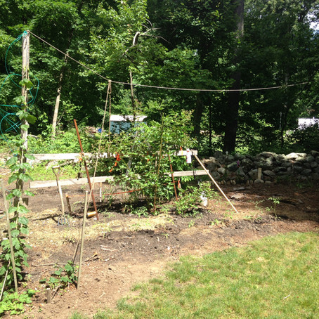 Local Backyard Organic Gardening Movement