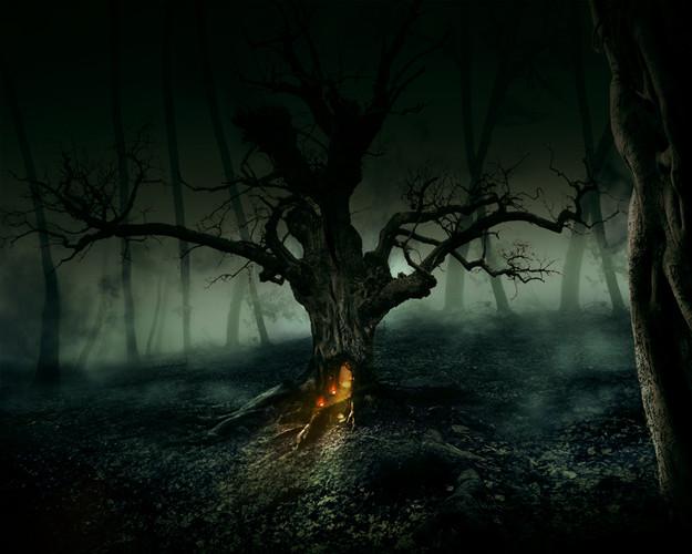 Frame forestve2.jpg