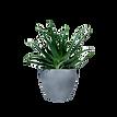 kisspng-flowerpot-vase-cachepot-succulen