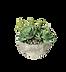 png-transparent-green-succulent-plants-s