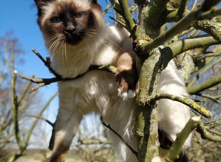 Hudlidelser hos katte