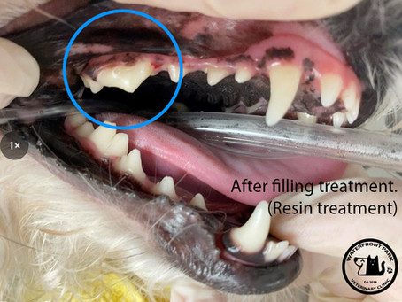 Restorative care for a broken tooth.