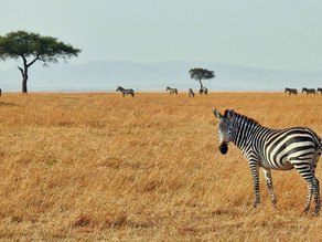 Zebra spotting: Five rare diseases and how to identify them