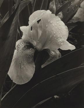 1932 Alma Lavenson
