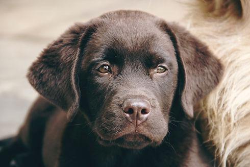 Canva - Close-up Photo Of Dog.jpg