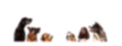 WEBSITE DOGS IN A ROW.png