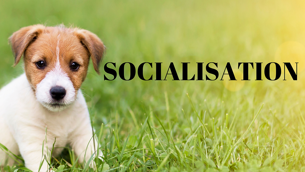 SOCIALISATION COVER.png
