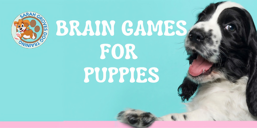 Brain Games For Puppies Online 7 day Crash Course