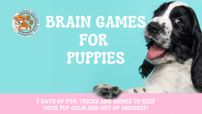 Braingames fb cover.png