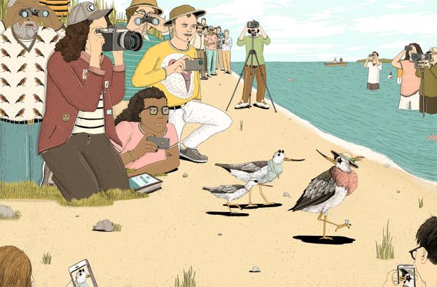 Terek Sandpiper: Birding in Rhode Island