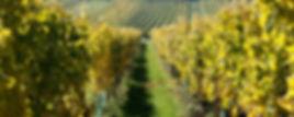 Domdechant Herbst 163.jpg