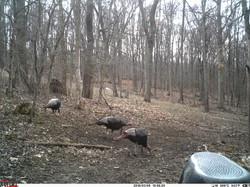 turkey trail pics a (50)