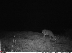 deer trail pics (23)