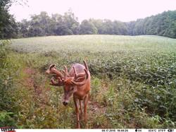 deer trail pics (76)