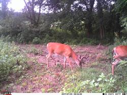 deer trail pics (43)