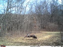 turkey trail pics a (67)