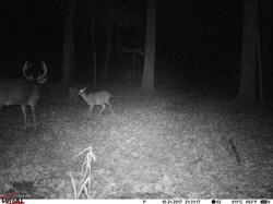 deer trail pics (34)