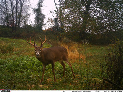 deer trail pics (26)