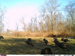 turkey trail pics a (29)
