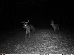 deer trail pics (9)