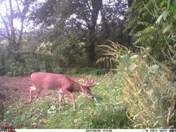 deer trail pics (56)